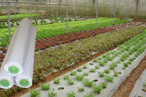 Màng phủ nông nghiệp giá rẻ tại Hà Nội